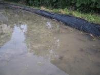 アゼマルチ (ポリシート)- 厚さ0.04mm×幅60cm×長さ200m