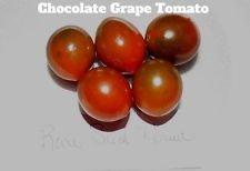SANHOC Samen-Paket: Schokoladen-Tomate sät! Toller Geschmack! Kamm. S / H Siehe Unser Speicher!