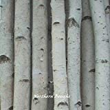 Six Thin White Courier shipping free Birch Poles 8 ft Super popular specialty store