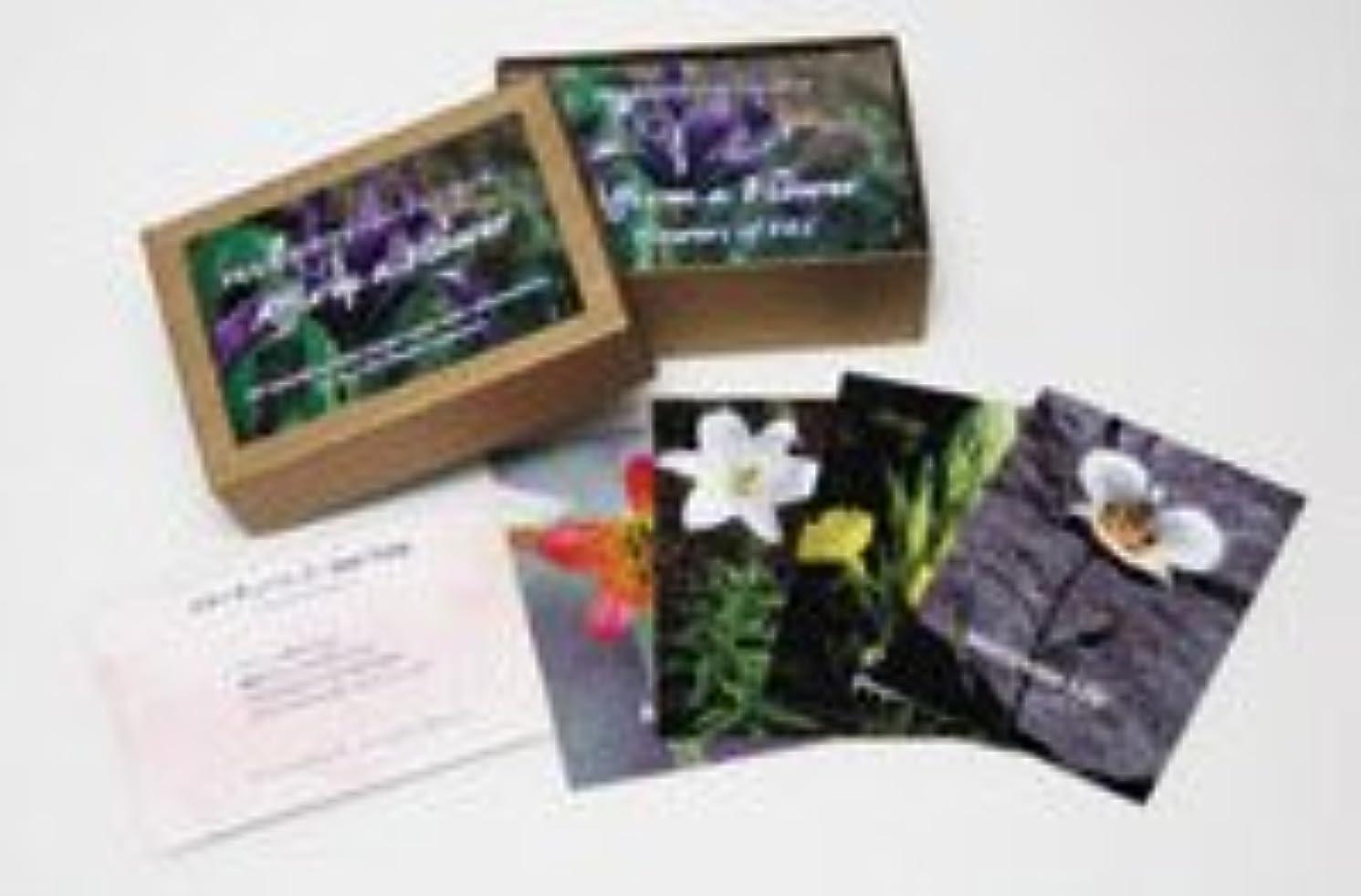 北くるみ委員長FESフラワーエッセンス アファメーションカード 103枚(日本版) (Flower Essence Society) 日本国内正規品