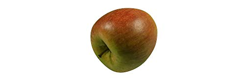 ERRO Food Dummy Apfel Cox orange - Deko Obstattrappe