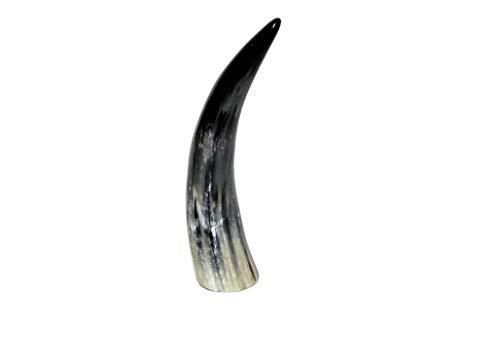Brillibrum Design Kuhhorn 20cm bis 30cm echtes Horn poliert Watussi Rinderhörner zur Dekoration
