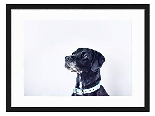 prz0vprz0v 11 x 13 inch zwart fotolijst Dog-Snout-Labrador-Retriever-Dog-Breed-Dog-Like-Mammal-Dog-Crossbreeds decoratieve kunstafdrukken en hangende sjabloon, modern fotolijst