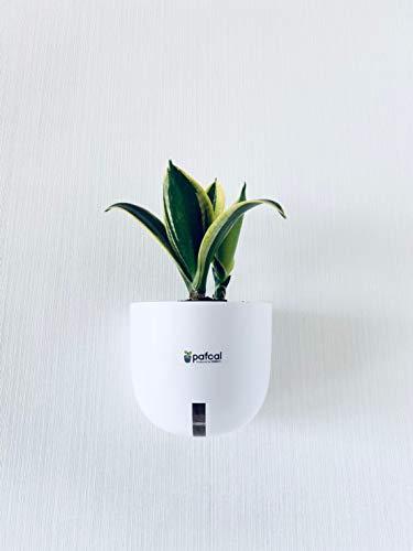 ミドリエ デザイン シリーズ 土を超える土壌 パフカル 観葉植物 壁掛け 底面給水 easy pot-E (サンスベリア)