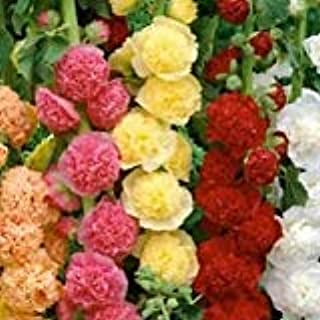 Best hollyhock fordhook giants mix Reviews