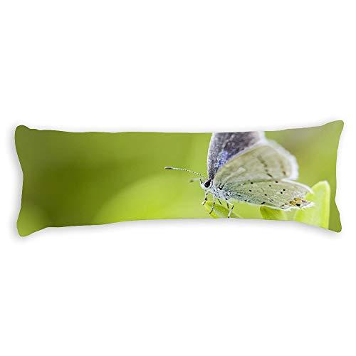 pealrich Fundas de almohada para pelo y piel de 30.5 x 50.8 cm, color lila y blanco mariposa decorativa para cojín lumbar fundas de cojín para sofá, dormitorio o coche