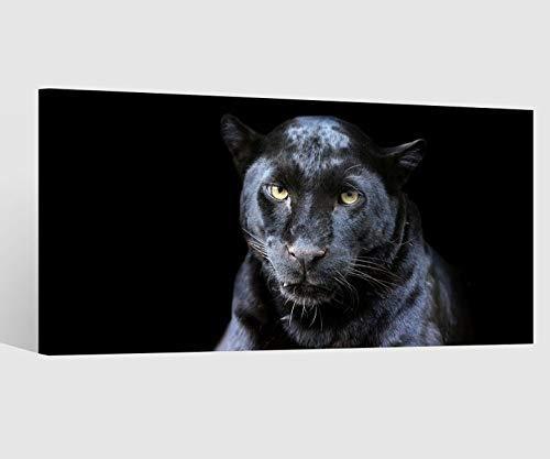 Leinwandbild Puma schwarz Panther Jaguar Kat6 Tier Leinwand Bild Bilder Tierwelt Wandbild Holz Leinwandbilder Kunstdruck vom Hersteller 9AB859, Leinwand Größe 1:80x40cm