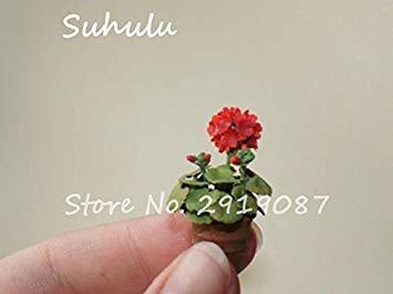 Vistaric 100pcs Rare Mini Geranium Graines Vivaces Belles Fleurs Graines Pelargonium Peltatum Graines disponibles bonsaï mélange en pot couleurs 4
