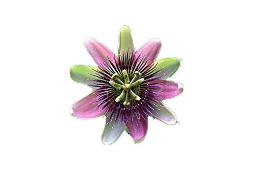 KINGDUO Egrow 50Pcs/Pack Passiflora Incarnata Graines Jardin Plantes Fruits De La Passion Fleur Bonsai Graines-1