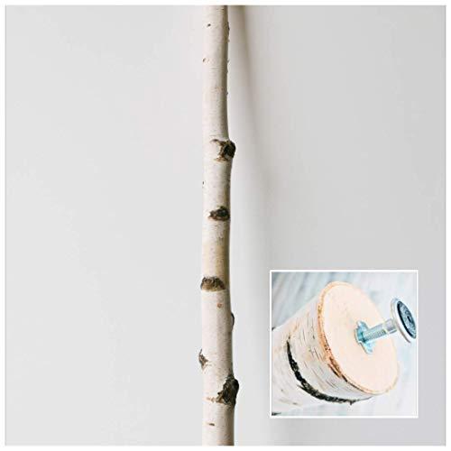 Weißer Birkenstamm mit Stellfuß getrocknet - bis 3 Meter Länge