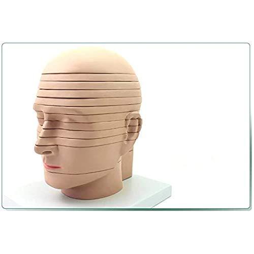 SLRMKK Modelo anatómico de sección Transversal de Cerebro Humano extraíble Investigación de enseñanza Modelo de Pantalla de Corte Horizontal, radiología de imágenes de Modelo Cerebral para aprendizaj