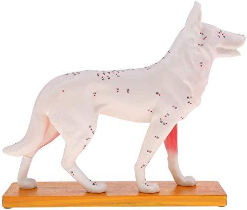 LBYLYH Anatomía Modelo Kit y Perro Esqueleto 4D Vision 1, 1, Modelo...