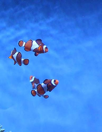 Clown Fish Fishes Clowns Aquarium Fish Tank Tanks Underwater Ocean Sea Marine: Notebook Large Size 8.5 x 11 Ruled 150 Pages Softcover
