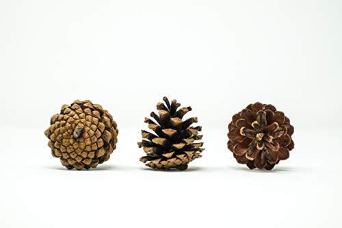 GET-GREEN Piñas de Pino Naturales Decorativas, secas, 4-7 cm, para Manualidades, decoración, 25 uds. Conos de Pino.