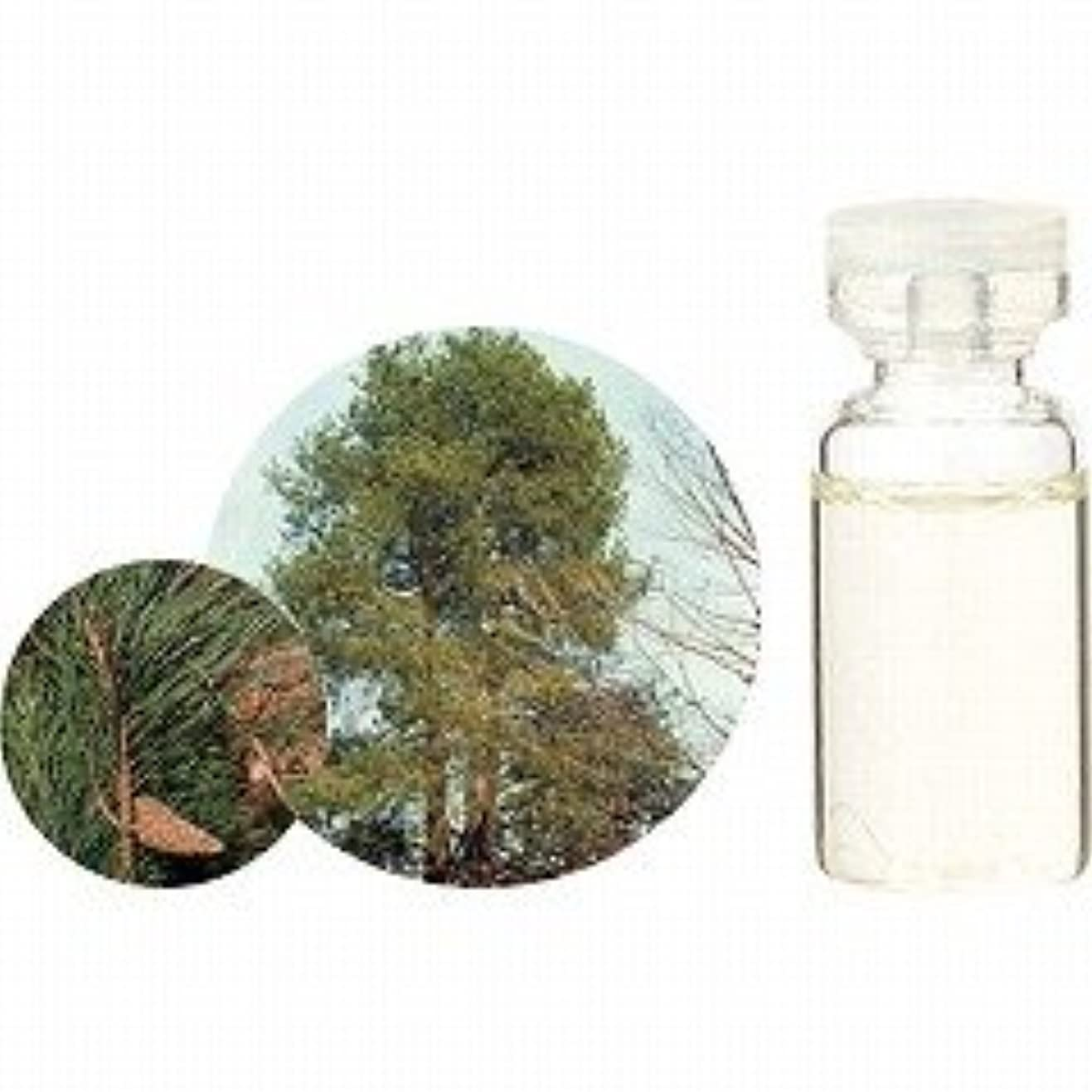 穀物大事にする落ち込んでいる【生活の木】エッセンシャルオイル(精油) パイン 3ml