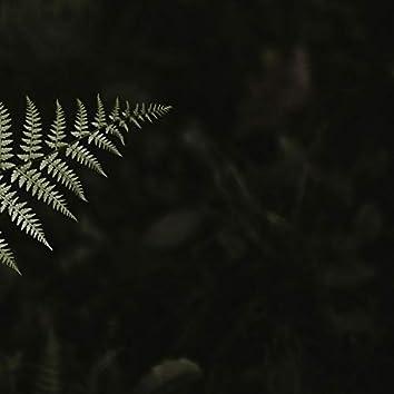 Healing Touch - Inspirational Music, Relaxing Nature Sounds