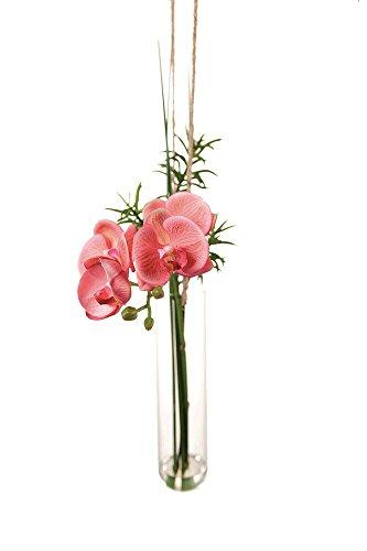 Sia Orchidee Rosa