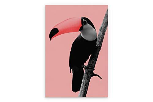 ColorQuest Pink Tucan - Lienzo decorativo (50 x 75 cm), diseño de Pink Tucan
