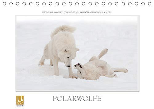Emotionale Momente: Polarwölfe. (Tischkalender 2021 DIN A5 quer)