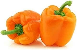 sweet pepper plants for sale