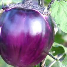 PlenTree - Semi di Melanzana Violetta di Firenze, 30 Semi di Alta qualità, Colore: Viola