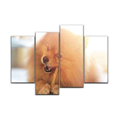Sudoiseau Wall Art Painting Cute Pomeranian Dog Chewing a Rawhide chew Stick pet Foods and Pictures Canvas Prints Poster Oil Paintings Landscape Paint Modern Home Decor Artwork Gift, 4 Panels