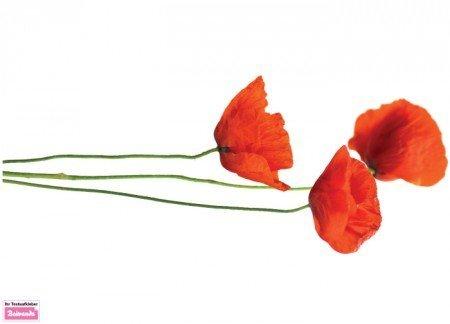 Beiwanda Wandtattoo Mohnblumen 120 x 47 cm