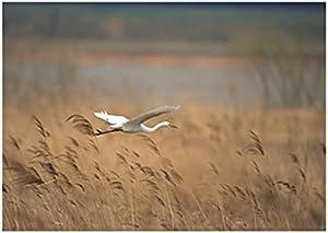 صورة بلوك الطيور المناظر الطبيعية تابلوه 45 سم × 30 سم