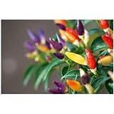 200pcsの/バッグ新レアチリの種ペッパー種子インドスタイルブート・ジョロキア種子チリ種子2