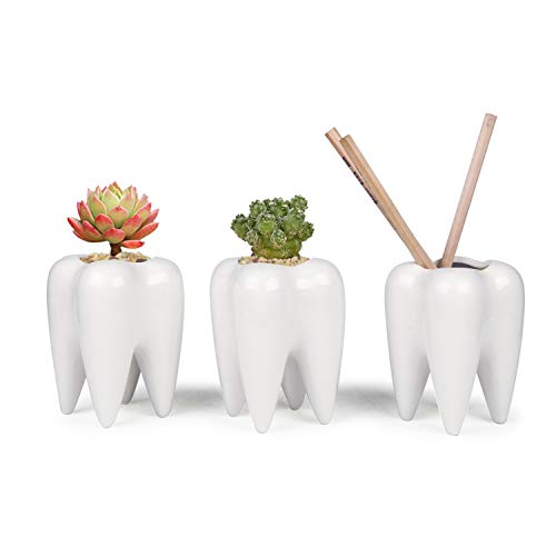 ComSaf Cute Tooth Shaped Pen Pencil Holder, White Ceramic Succulent Planter Pots for Home Office Decoration Desk Organization, Set of 3