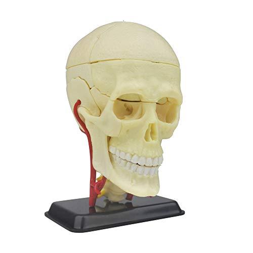 Modello di teschio di anatomia umana   39 pezzi puzzle teschio umano   perfetto per lo studio dell anatomia   ottimo regalo per infermieri, studenti di medicina