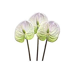 3 PCS 27″ Artificial Anthurium Lily Flowers for Home Decor Bouquet and Green Leaf and Bridal Wedding Festival Decoration Small Flower Flower Arrangement,UV Resistant No Fade (White)