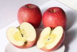 青森県産 りんご サンふじ 減農薬栽培 10kg 訳あり