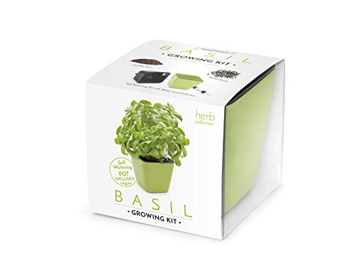Domestico Kit de ALBAHACA para cultivar, Basil Growing Kit, All-In-One Set, Hidrojardinera 13x13 cm, semillas testadas, sustrato fresco con nutrientes