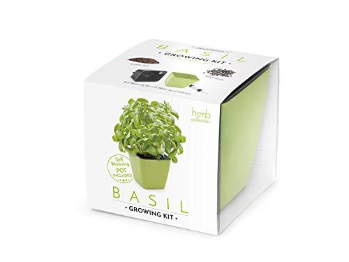 DOMESTICO Basilikum Anzuchtset (Basil Growing Kit) Domestico, All-In-One-Set, Set mit Selbstbewässerungstopf 13x13 cm, Substrat und Samen