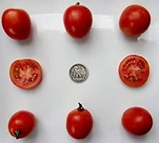 northern delight tomato