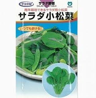 小松菜 種 【サラダ小松菜】 小袋(約20ml)