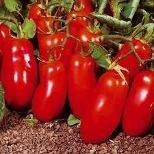 Fash Lady 200 graines biologiques, graines de tomates Heirloom San Marzano Nouvelles graines pour 2017