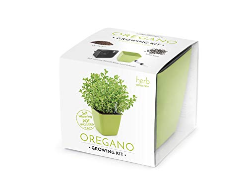 Domestico Kit de ORÉGANO para cultivar, Oregano Growing Kit, All-In-One Set, Hidrojardinera 13x13 cm, semillas testadas, sustrato fresco con nutrientes