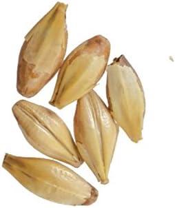Nippon regular agency Briess GS520 Malt Caramel Sack 50 20L lb Discount is also underway
