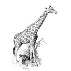 "ROYAL BRUSH Sketching Made Easy Giraffe Mini Kit, 5"" by 7"""