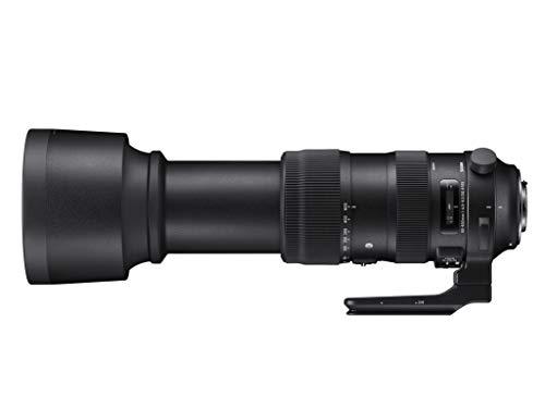 シグマ『60-600mmF4.5-6.3DGOSHSMSportsキヤノン用』