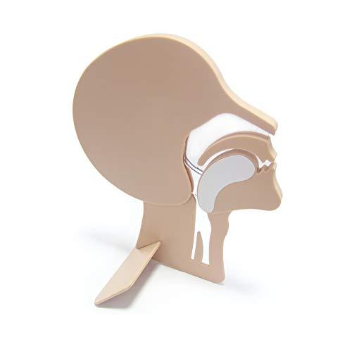 Kopfschnittmodell zur Demonstration verlegter Atemwege bei Bewusstlosen