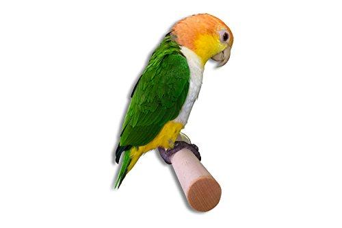 Robuste Sitzstange aus Hartholz für große Nymphensittiche und Papageien. Selbst gedrechselt (19-24cm)