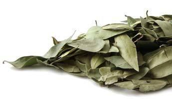 Bulk Herbs: Myrtle Leaf (Organic)
