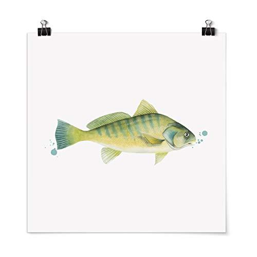 Bilderwelten Poster Farbfang Flussbarsch Quadrat, Galerieprint Glänzend 50 x 50cm