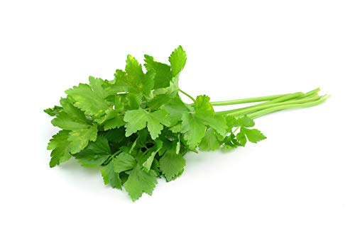 Cilantro - 50 semillas - Una planta de especias muy popular y conocida