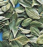 Buchu Leaf, Whole - Wildcrafted - Barosma betulina (454g = One Pound)...