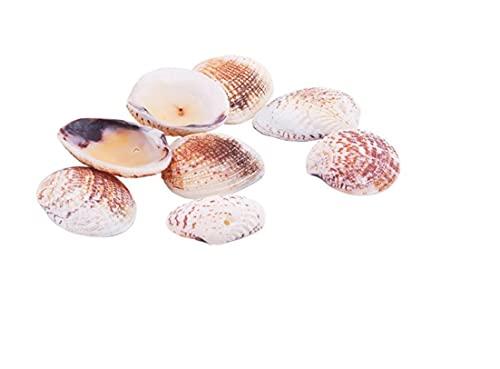 ROSENICE Muschel Perlen mit Loch Deko Muscheln zum Basteln für DIY Handwerk Schmuckherstellung 50 Stücke