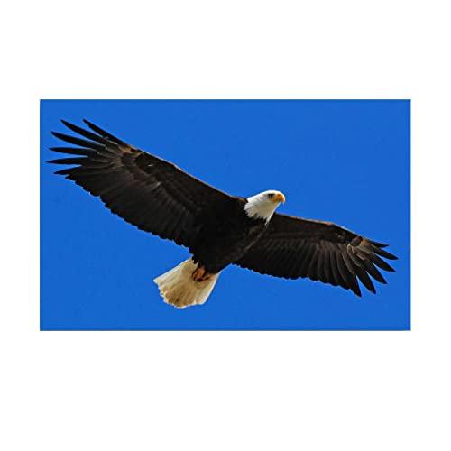 zhengchen Stampa su Tela Aquila Animale Che Si Libra nel Cielo Azzurro Dipinto su Tela Poster e Stampe Immagini di Arte della Parete Decorazione del Soggiorno 60x90 cm/23.6'x35.4' Incorniciato